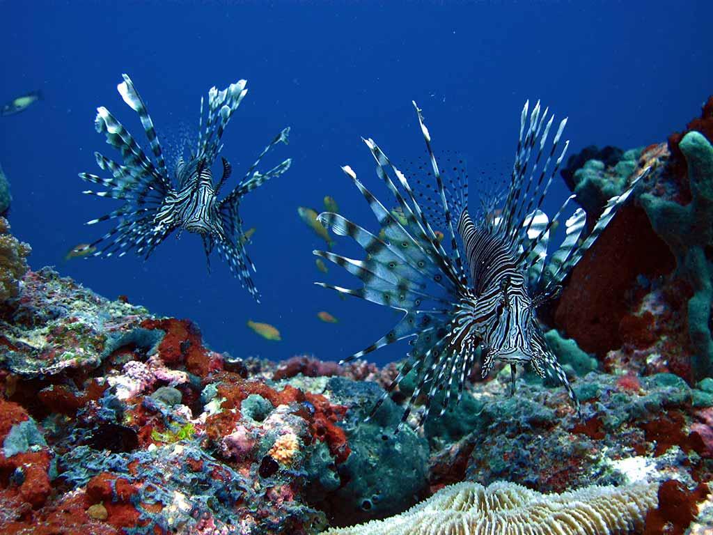 Mengenal Kepulauan Maldives dan Kesempatan Kerja di Maldives