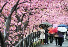 Peluang Kerja Magang ke Jepang Diberbagai Bidang Pemerintah Kabupaten Badung 2019